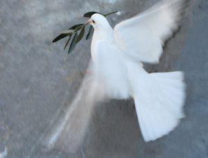 από http://www.panoramio.com/photo/18005128